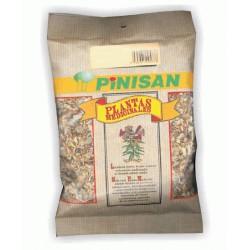 Cardo Mariano Planta  40 Gr Pinisan